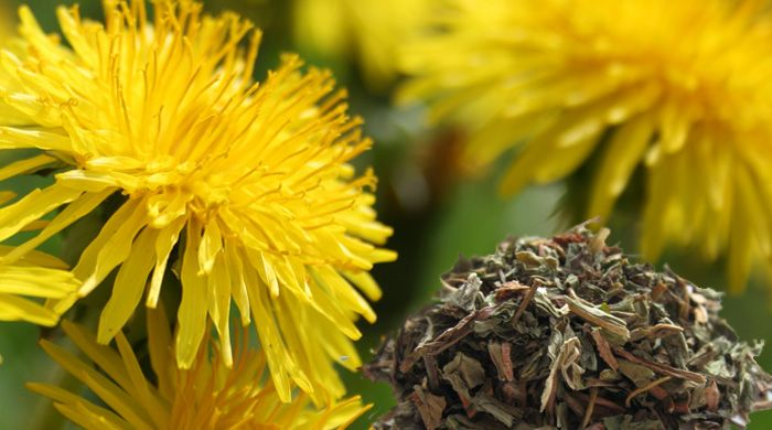 Herbs: Herbalists use dandelion root to detoxify the liver and gallbladder, and…