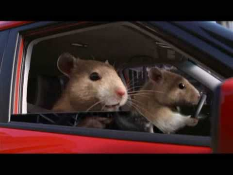Kia Hamster Commercial >> Hamster Wheel Car Ads: Kia Soul Commercial Uses Pet Rodents to Show a New Way to Roll (by David ...