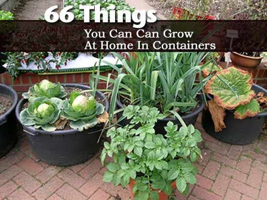 Kitchen Garden In Pots 22 best gardens images on pinterest shells clam shells and sea shells 66 things you can grow at home in containers workwithnaturefo