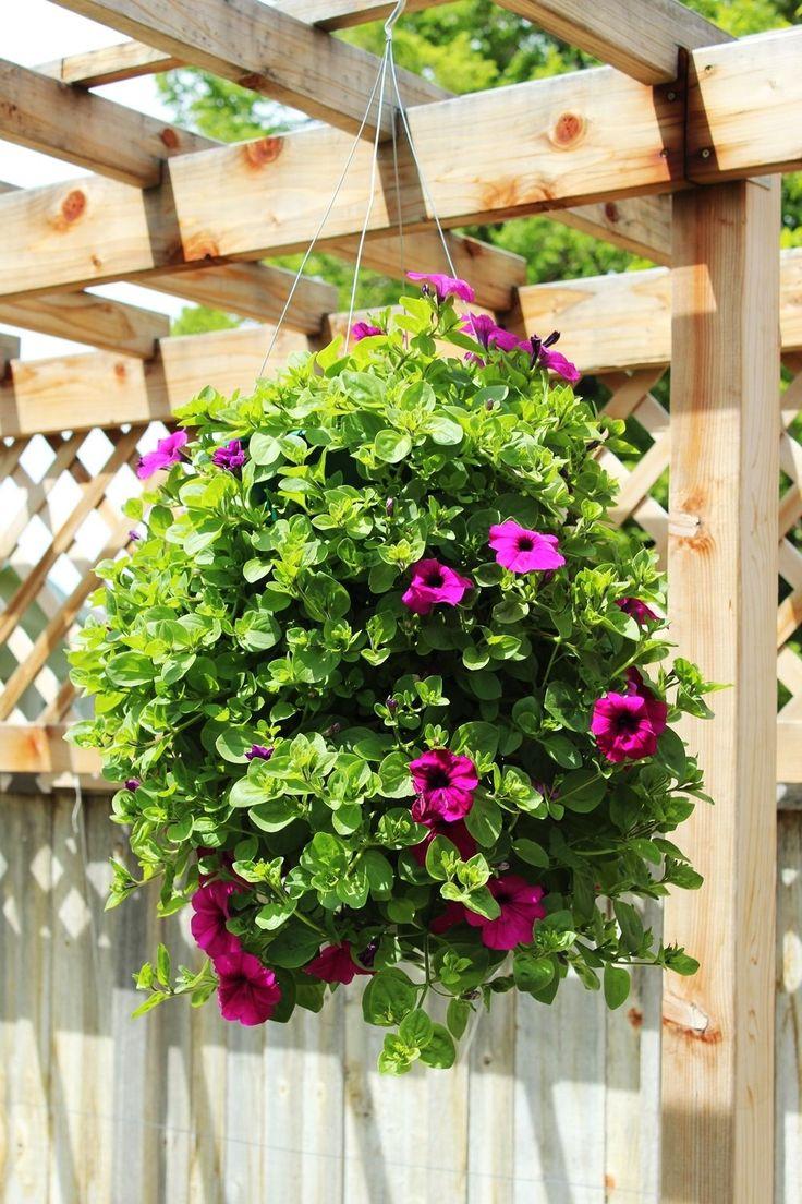 Best 25+ Hanging flower baskets ideas on Pinterest   Plants for ...