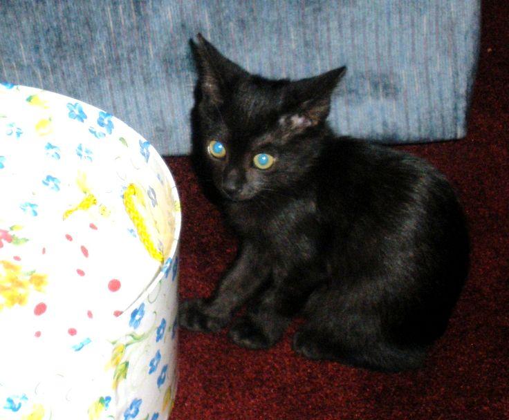 baby black cat Willa | BLACK CATS | Pinterest