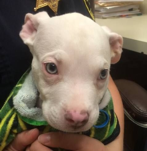 Puppy Thrown Away In Apartment Complex Dumpster