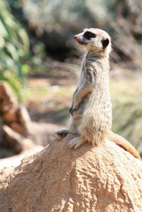 Zoos Victoria - Werribee Open Range Zoo, Werribee Melbourne - Zoos
