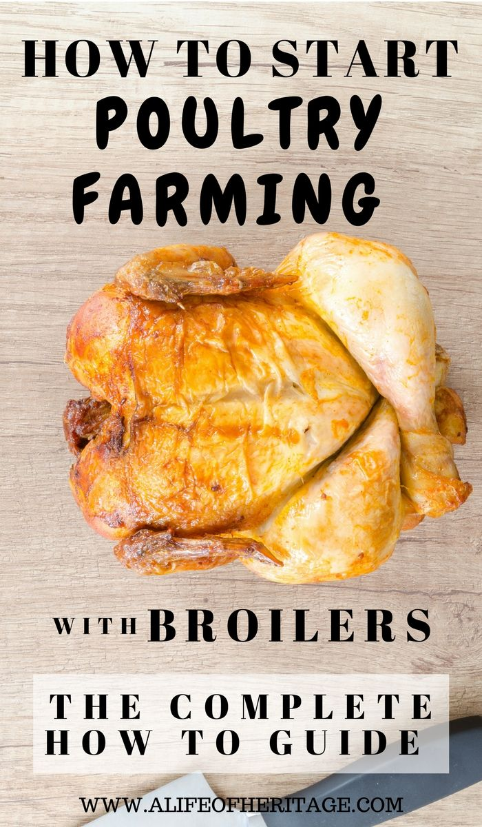Poultry Farming can be a great way to increase income with your chickens, but there is a lot of information to learn before endeavoring into a profitable business. This will be a complete guide looking into all the aspects of raising chickens to sell as broilers. via @delciplouffe