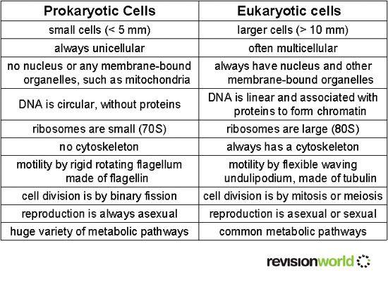 303 best Biology's images on Pinterest