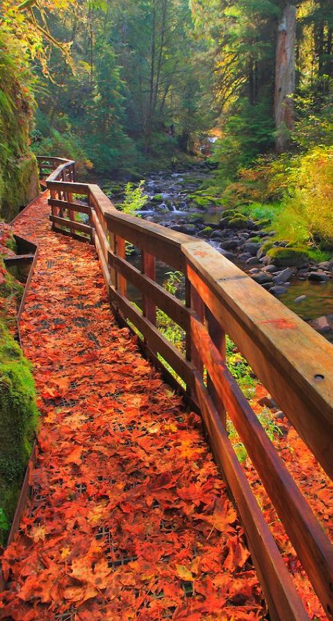 Go take (an Autumn) hike! Hear those leaves crunching beneath your feet---Sweet Creek Trail in Mapleton, Oregon