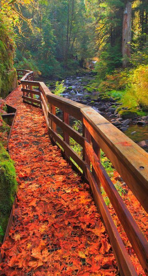 Sweet Creek Trail in Mapleton, Oregon • Bill Edwards Photography
