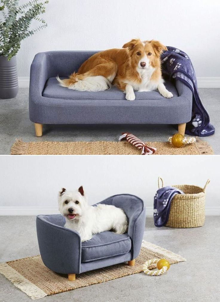 Aldi's Famous Pet Sofa Beds will be Available After 21