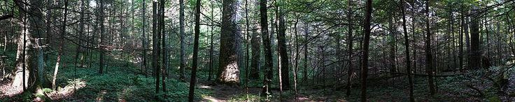 Joyce Kilmer Forest (Carolina del Norte, Estados Unidos)