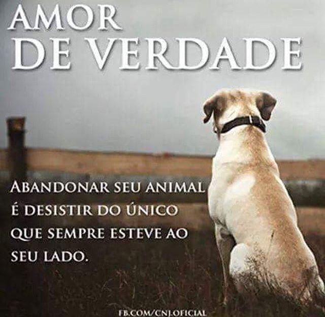 CONCORDO!  #amoanimais  #gato  #amogato  #gatofofo  #viralata  #cachorro  #amocachorro  #cachorroétudodebom  #petmeupet
