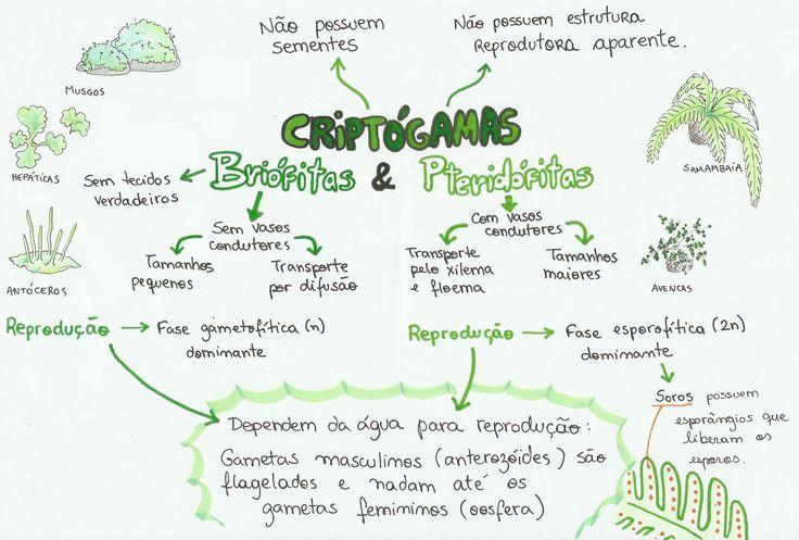 mapa-bio-criptogamas-briófitas-pteridófitas