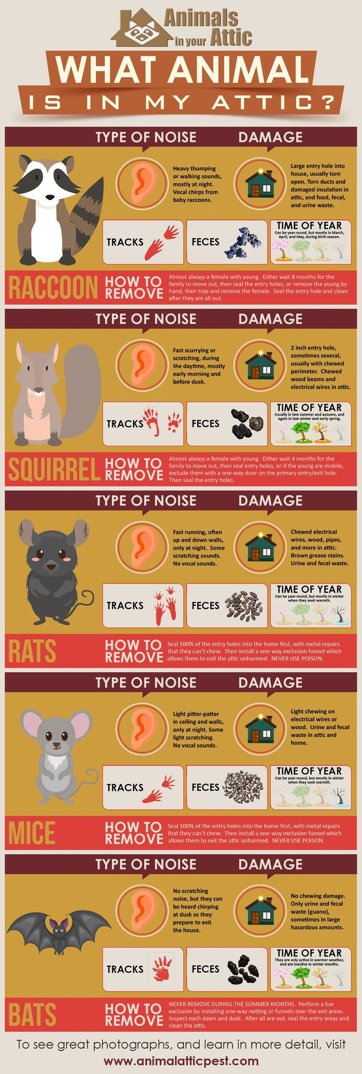 Find out which animal is in your attic infographic