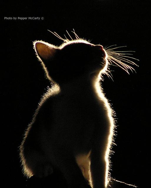 rim light. & 21 best Lighting Styles images on Pinterest | Faces Beautiful ...