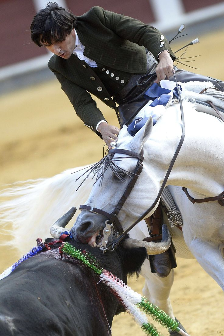 179 best angry frightened horse ref images on pinterest horses