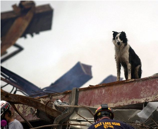 9/11 Dogs | Remembering Heroic 9/11 Dogs | Dogster