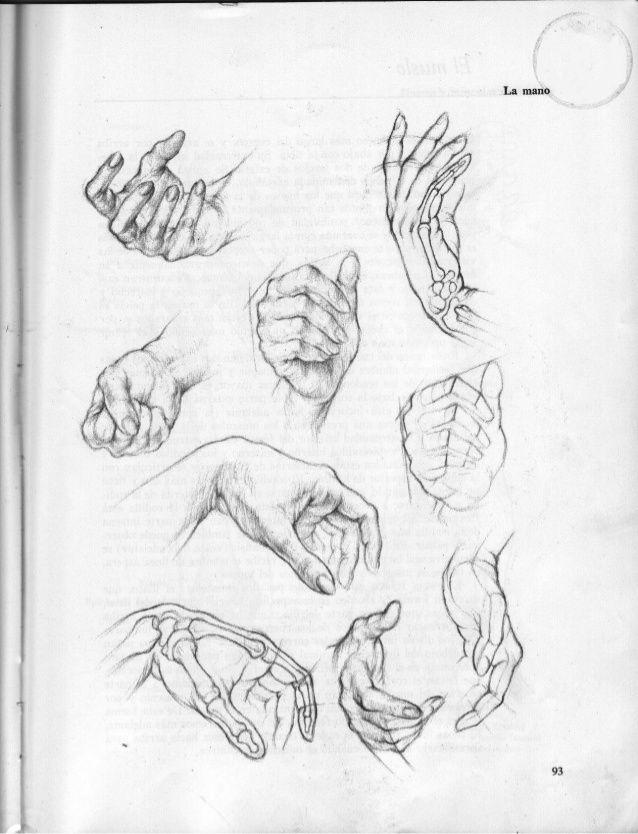 Anatomia-artistica-dibujo-anatomico-de-la-figura-humana