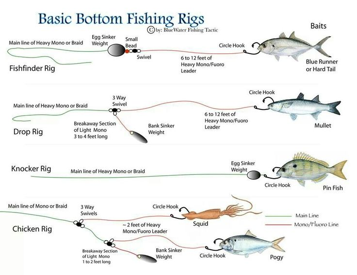 Best 25 fishing rigs ideas on pinterest fishing tips for Bass fishing rig