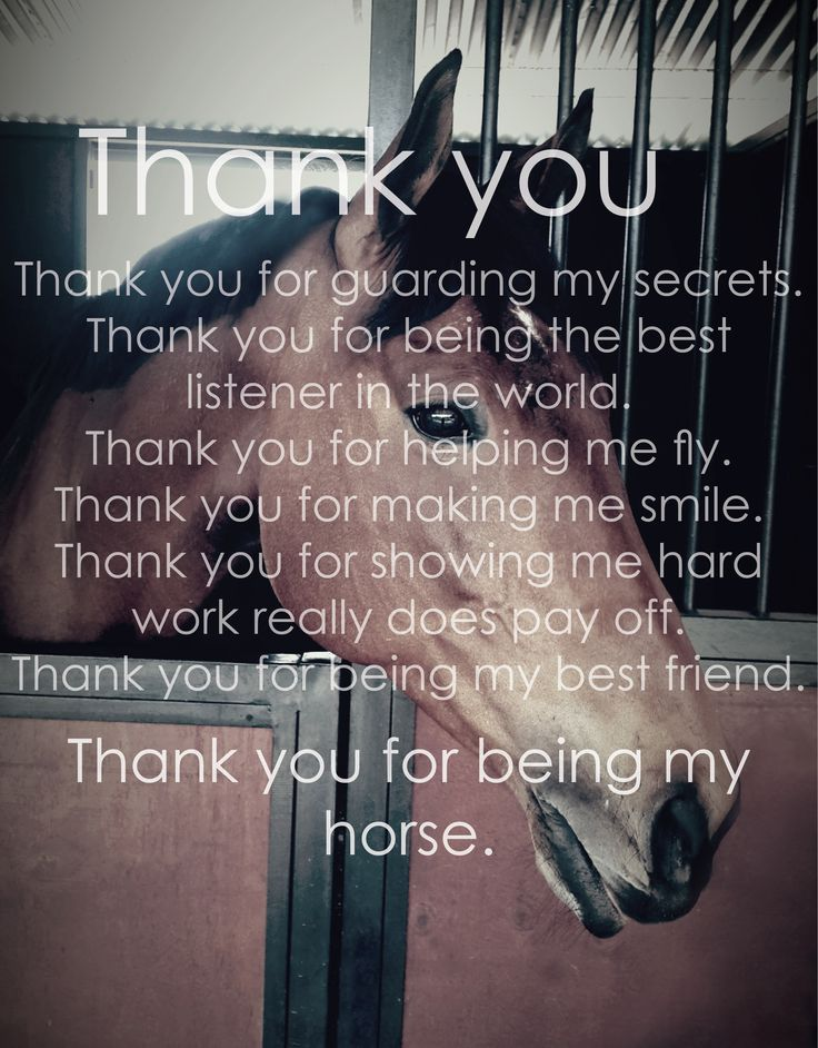 Thank you for being my horse
