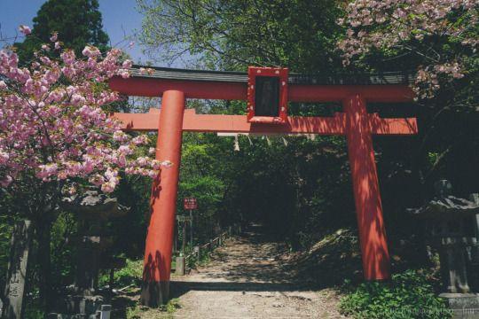 Kuroinu's Photo