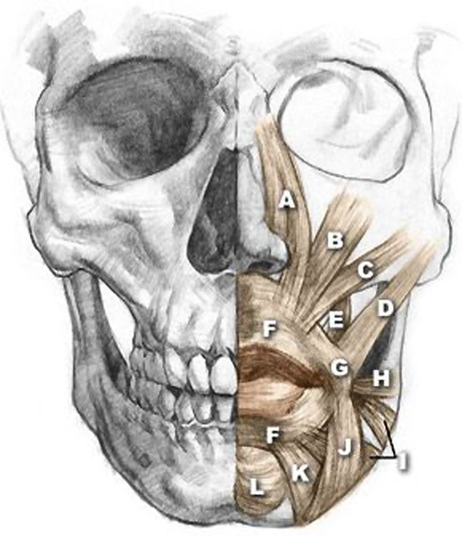 124 best Skull images on Pinterest | Anatomy reference, Drawing ...