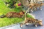 Tips kucing, cara cepat melatih kucing. Info kucing dan makanan kucing yang bagus http://www.kucinglovers.com #kucing #cat #catlovers #kucinglovers #pet #animal