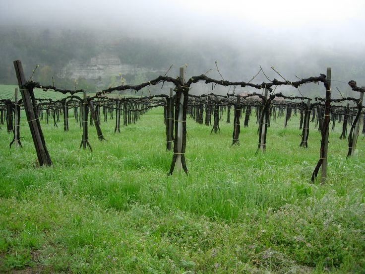 vigne a primavera nella Langa Astigiana