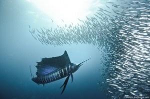 Le foto subacquee mozzafiato di Alexander Safonov