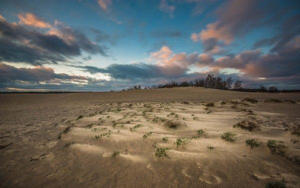 Loonse duinen - zonsondergang