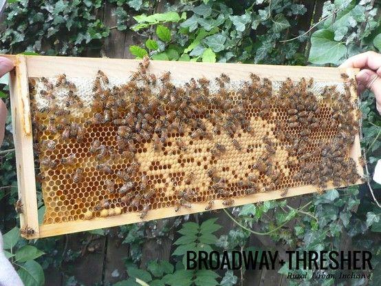 raising bees bee hives bee keeping honey bees biology farming