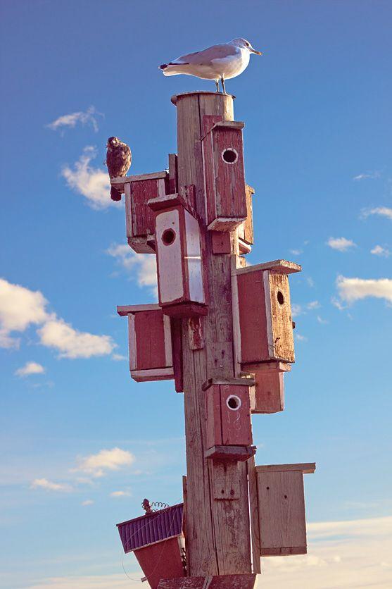 Bird houses at  Café Regatta – Cozy Cottage by the Seaside by Conchi Garcia, RAWR Magazine