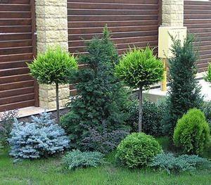 пионы И ХВОЙНЫЕ в садовом дизайне: 8 тыс изображений найдено в Яндекс.Картинках