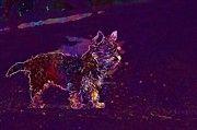 "New artwork for sale! - "" Dog Puppy Yorkshire Terrier  by PixBreak Art "" - http://ift.tt/2uepRMD"