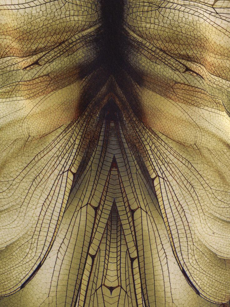 McQAlexanderMcQueen printed silk