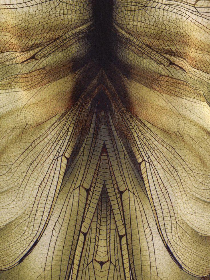 Dragonfly-print dress | MCQ ALEXANDER MCQUEEN