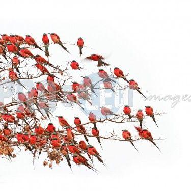 Wildlife - Photographic art by Kobus Saayman.