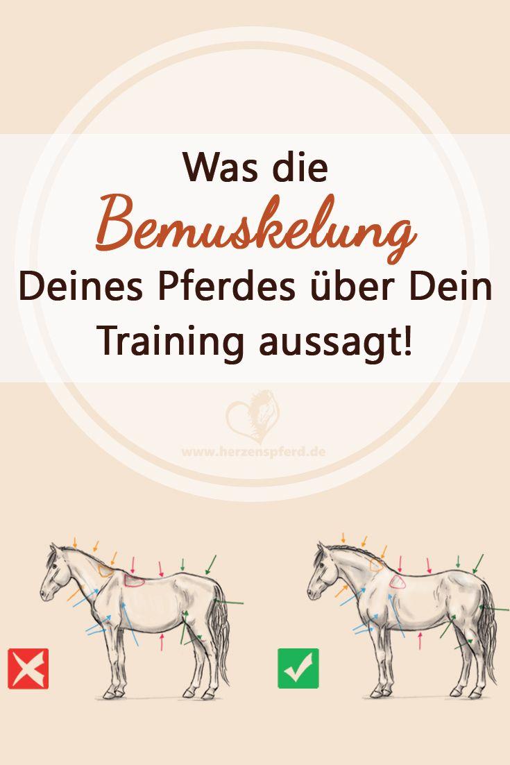 Trainierst Du Dein Pferd richtig? Was die Bemuskelung Deines Pferdes über das Training aussagt!