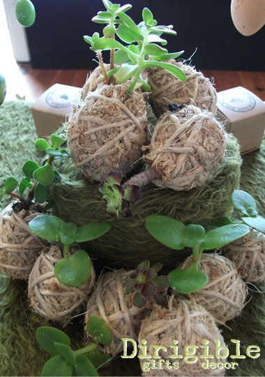 Kokedama is a Japanese method of binding plants these sweet succulent eggs make a lovely gift for the garden lover in your life.