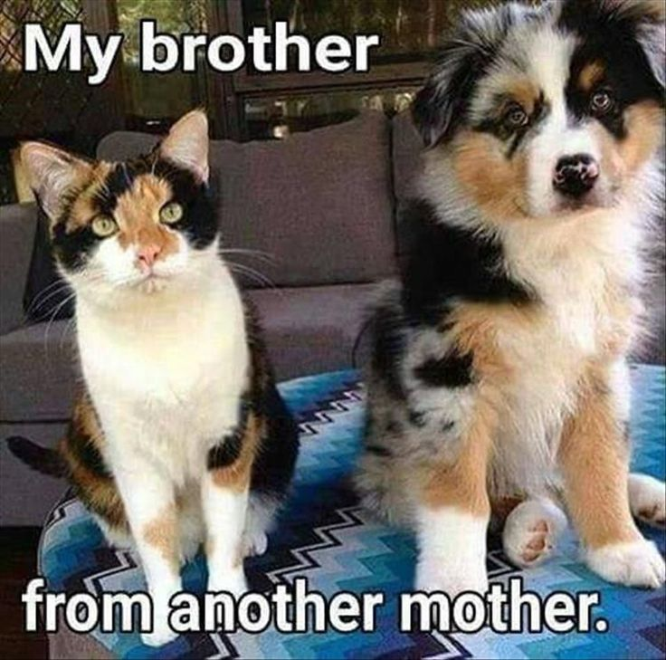 My brother. My bad. LOL. Funny Animal Pictures Of The Day - 24 Pics