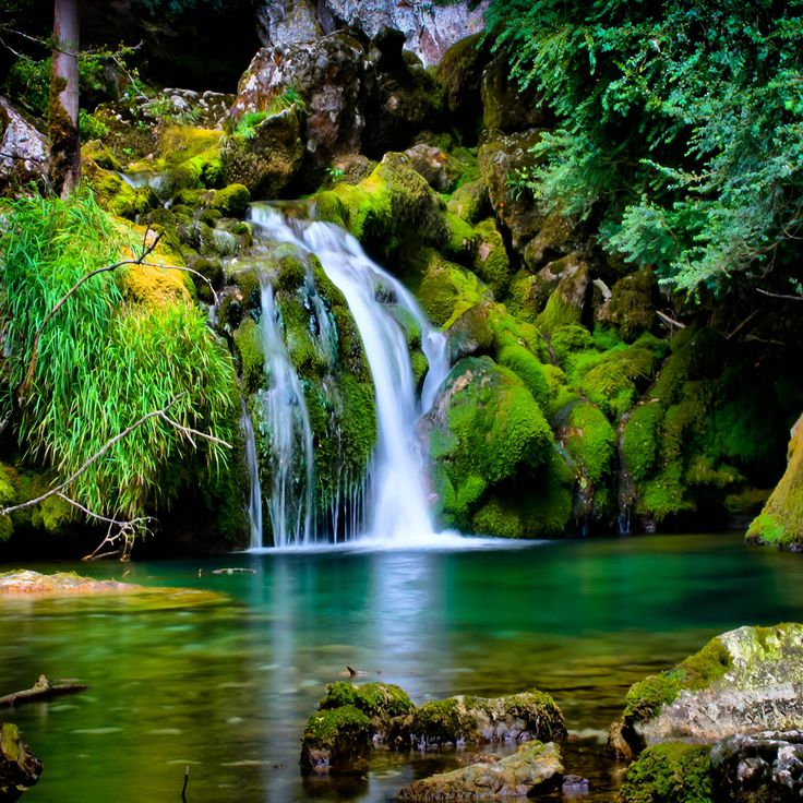 30 Best Forest Water Edge Images On Pinterest Rivers