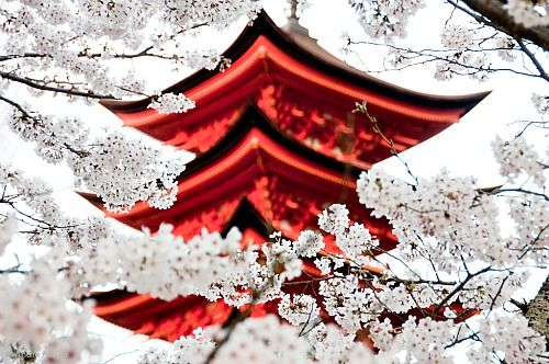 Red and white #photography: Cherries Blossoms, Temples, Color, Beauty Place, Japan Red, Travel, Photo, Japan Gardens, Asian Art