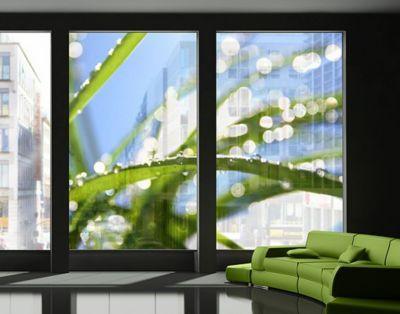 Trend Fensterfolie XXL Fensterbild Kiss of Sun Fensterbilder Fr hling Fenster Sichtschutz Jetzt bestellen