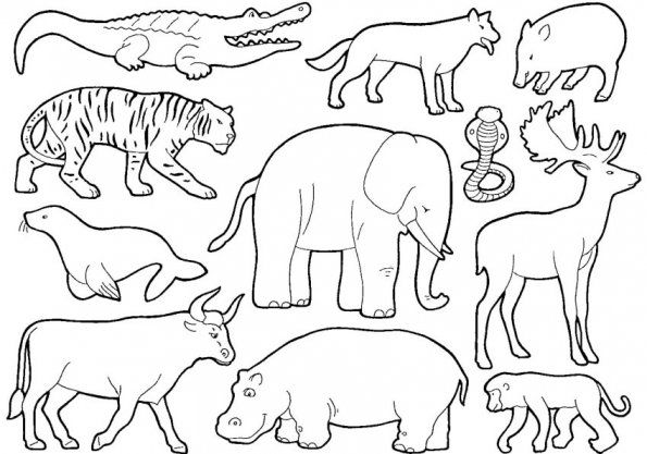 les animaux de la jungle - coloriages