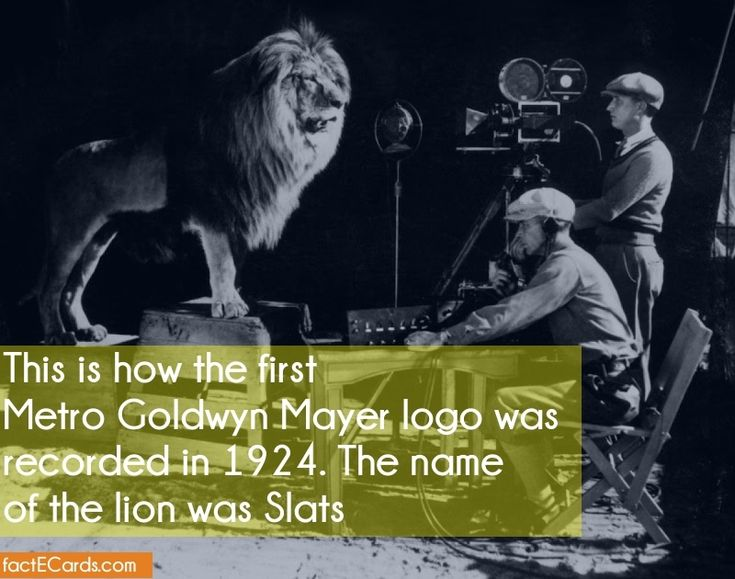 This is how the first Metro Goldwyn Mayer logo was recorded in 1924. The name of the lion was Slats - http://factecards.com/how-first-metro-goldwyn-mayer/
