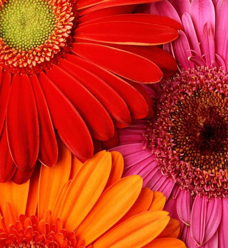 Best 25 Flower Desktop Wallpaper Ideas On Pinterest: Best 25+ Daisy Wallpaper Ideas On Pinterest