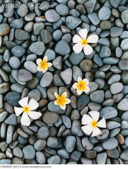 Flower Arrangement on Pebbles