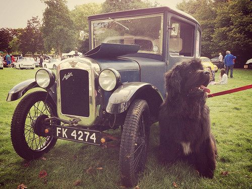 The perfect dog for any Austin 7 owner! | Flickr - Photo Sharing!