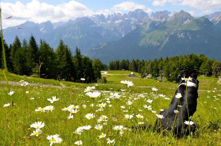 Dolomiti di Brenta #Trentino