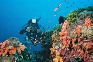 На Бали располагается несколько мест, которые предназначены для подводного плавания с аквалангом. К ним относятся Амед, Туламбен, Нуса Лембонган, Пемутеран и остров Манджанган. Дайверы могут начать свой путь из этих точек, либо из районов Кута или Санур. Некоторые операторы дайвинг-услуг предлагают посетить их собственный сайт, где они могут заранее организовать ваше подводное путешествие еще до приезда на остров Бали.  Обучение дайвингу составляет примерно 4-5 дней.