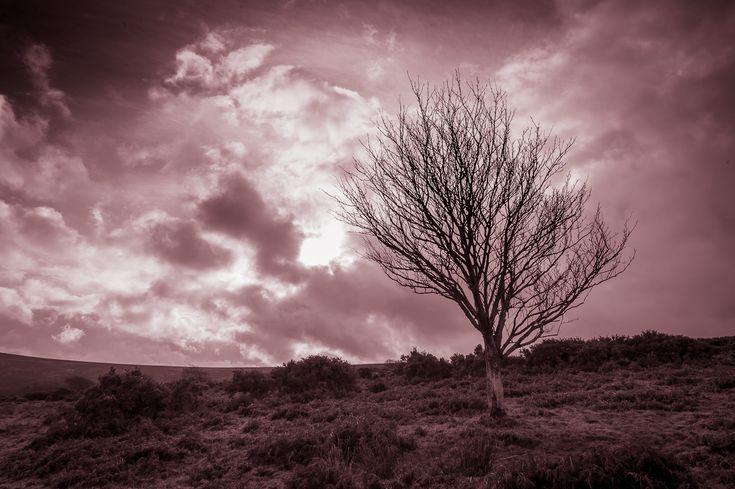 FYI: SALE : Framed Mounted Print : Tree Alone Exmoor #exmoor