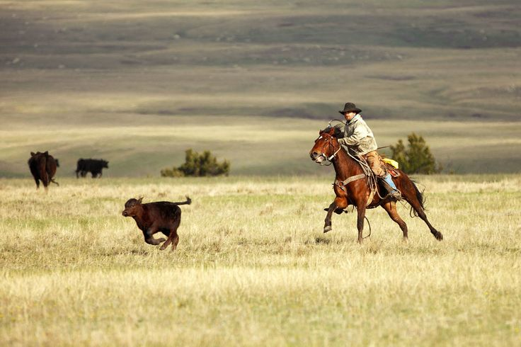 Real Cowboys From montana | Cowboy Photography